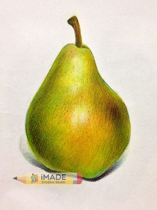 realistic-colour-pencil-drawing-pear-imade